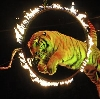 Цирки в Володарске