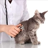 Ветеринарные клиники в Володарске
